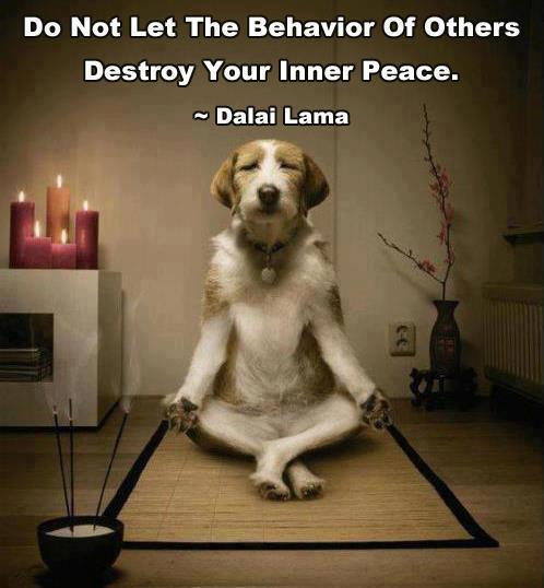 Puppie Meditation